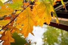 Folhas de outono coloridas fotografia de stock royalty free