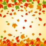 Folhas de outono coloridas Imagens de Stock Royalty Free