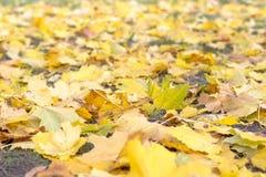 Folhas de outono coloridas Autumn Pattern fotografia de stock royalty free