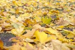 Folhas de outono coloridas Autumn Pattern foto de stock royalty free