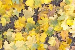 Folhas de outono coloridas Autumn Pattern imagens de stock