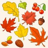 Folhas de outono coloridas bonitas da coleção Fotografia de Stock Royalty Free