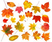 Folhas de outono coloridas bonitas da coleção isoladas no branco imagem de stock