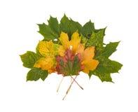 Folhas de outono coloridas bonitas da coleção no fundo branco Imagem de Stock Royalty Free