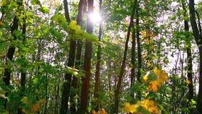 Folhas de outono coloridas com forte vento no movimento lento vídeos de arquivo