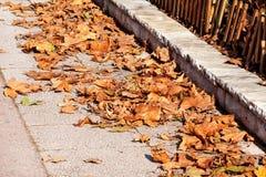 Folhas de outono coloridas e marrons, textura, material e fundo Deixa as folhas das árvores, fim acima Imagens de Stock Royalty Free