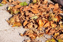Folhas de outono coloridas e marrons, textura, material e fundo Deixa as folhas das árvores, fim acima Imagem de Stock Royalty Free