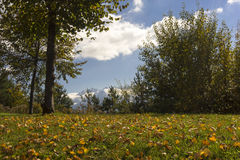 Folhas de outono coloridas em um campo rural Fotos de Stock