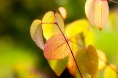 Folhas de outono coloridas em uma floresta Imagens de Stock