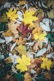 Folhas de outono coloridas na terra Imagens de Stock Royalty Free