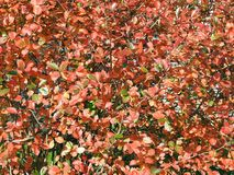 Folhas de outono coloridas no parque, Lituânia imagem de stock