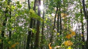 Folhas de outono coloridas no vento video estoque