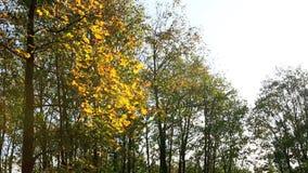 Folhas de outono coloridas no vento no movimento lento vídeos de arquivo