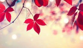 Folhas de outono coloridas sobre o fundo borrado da natureza imagens de stock