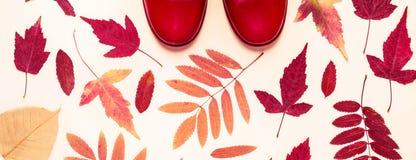 Folhas de outono coloridos e botas de borracha vermelhas Fundo do outono fotografia de stock royalty free