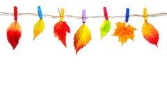 Folhas de outono coloridos nos pregadores de roupa, isolados no fundo branco imagem de stock royalty free
