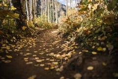Folhas de outono com base em uma fuga de montanhas fotos de stock