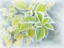 Folhas de outono com geada da manhã Foto de Stock Royalty Free