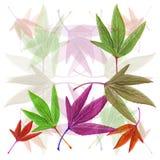 Folhas de outono com isolado no fundo branco Fotos de Stock Royalty Free