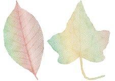 Folhas de outono com textura delicada Fotos de Stock Royalty Free