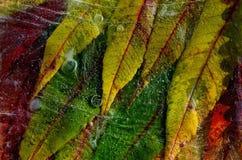 Folhas de outono congeladas Foto de Stock Royalty Free