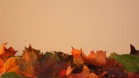 Folhas de outono contra uma luz - fundo alaranjado imagem de stock royalty free