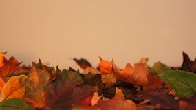 Folhas de outono contra uma luz - fundo alaranjado foto de stock