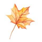 Folhas de outono da aquarela ilustração do vetor