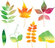 Folhas de outono da aquarela do vetor ajustadas ilustração do vetor