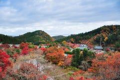 Folhas de outono da parte superior do templo de Katsuoji Imagens de Stock Royalty Free