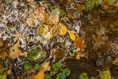 Folhas de outono da queda na areia no córrego no fim da floresta acima da foto fotos de stock royalty free