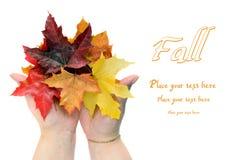 Folhas de outono da queda nas mãos das mulheres fotos de stock