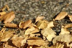 Folhas de outono de Brown Imagem de Stock