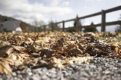 Folhas de outono de Brown em um trajeto do cascalho Imagens de Stock Royalty Free
