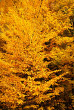 Folhas de outono de cores diferentes fotografia de stock royalty free