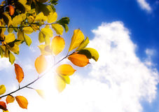 Folhas de outono de encontro ao céu Fotografia de Stock Royalty Free