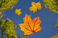 Folhas de outono de queda Fotos de Stock Royalty Free