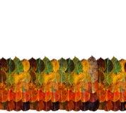 Folhas de outono do arco-?ris do verde marrom alaranjado amarelo em se A parte superior do quadro da beira ? folha A parte inferi fotografia de stock