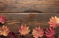 Folhas de outono do bordo japonês da palmeira no fundo de madeira da textura fotos de stock royalty free