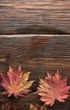Folhas de outono do bordo japonês da palmeira no fundo de madeira da textura imagem de stock royalty free