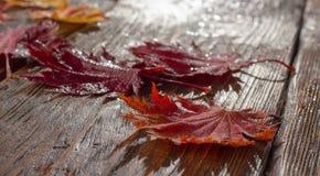 Folhas de outono do bordo japonês da palmeira no fundo de madeira da textura imagens de stock