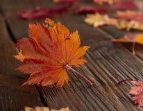 Folhas de outono do bordo japonês da palmeira no fundo de madeira da textura foto de stock royalty free