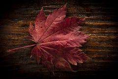 Folhas de outono do bordo japonês da palmeira no fundo de madeira da textura imagens de stock royalty free