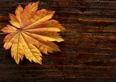 Folhas de outono do bordo japonês da palmeira no fundo de madeira da textura fotografia de stock