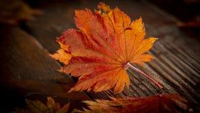 Folhas de outono do bordo japonês da palmeira no fundo de madeira da textura foto de stock