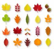 Folhas de outono do corte do papel ajustadas A queda deixa a coleção de papel colorida Ilustração de papel do estilo da arte do v Imagens de Stock Royalty Free