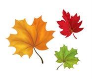 Folhas de outono do esboço do vetor ajustadas Foto de Stock Royalty Free