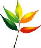 Folhas de outono do vetor Imagem de Stock