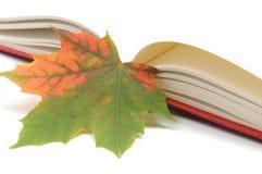 Folhas de outono do wih do livro Fotos de Stock