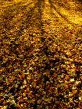 Folhas de outono douradas Fotografia de Stock Royalty Free